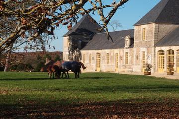 Château Cheval Quancard - Carbon-Blanc